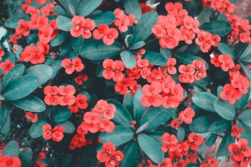 Plant sale in Trévérien this Sunday – 1st April 2012